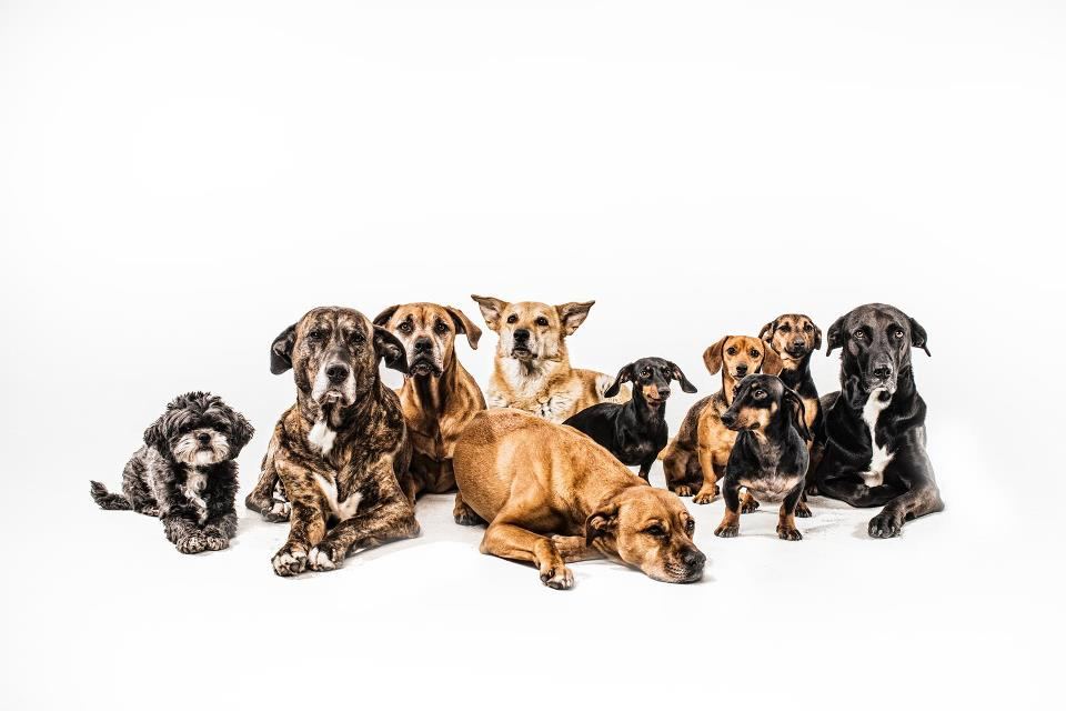 hundeweiss